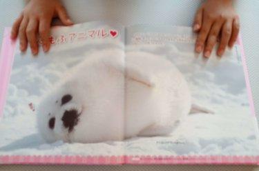 学研の図鑑「もふもふ動物」は小学生の女の子向けだけではなく大人にもおすすめ?