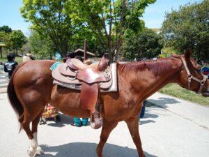 ハーベストの丘馬