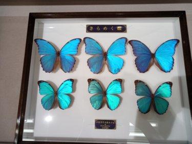 箕面公園昆虫館(大阪府)に行ってきた、甲虫や蝶がまるであつまれどうぶつの森の博物館みたい。