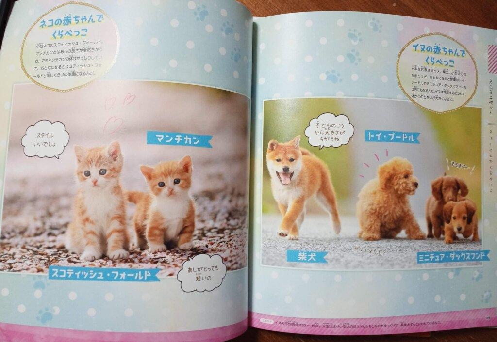 犬猫赤ちゃん